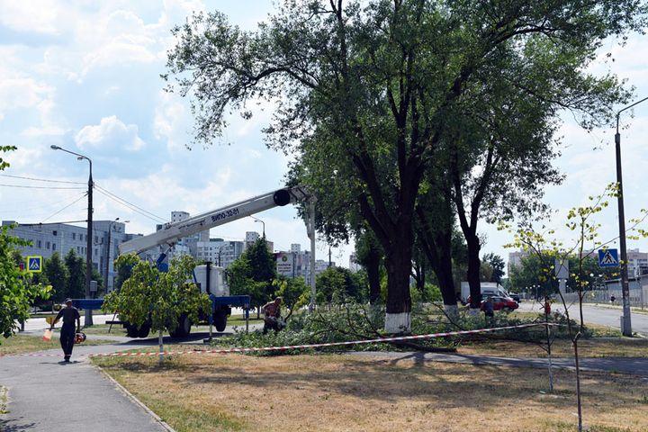 Деревья на Речицком проспекте cносят в целях безопасности