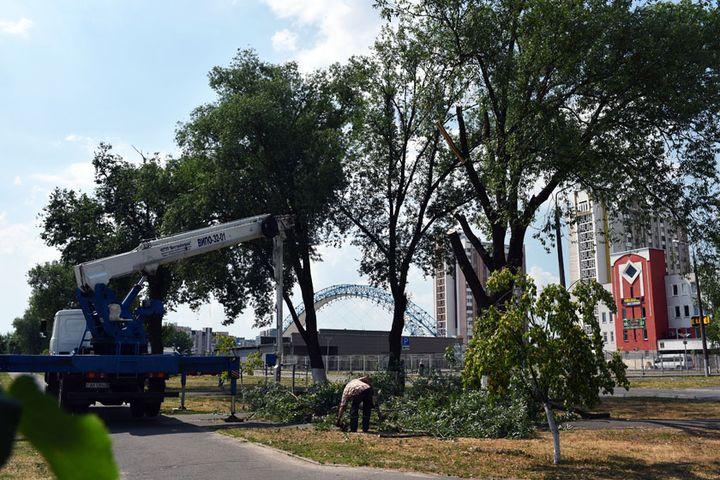 Деревья на Речицком проспекте